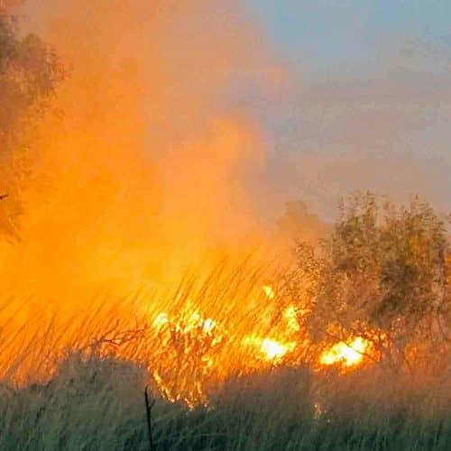 Savanna Burning Carbon Farming